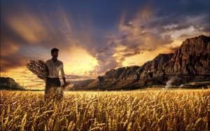 A colheita de Deus 300x187 Orientação Espiritual
