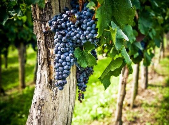 Jesus Cristo é a videira verdadeira(João 15:1). Todo aquele que permanece em Cristo é aperfeiçoado em Deus para que produza bons frutos em sua vida diária.